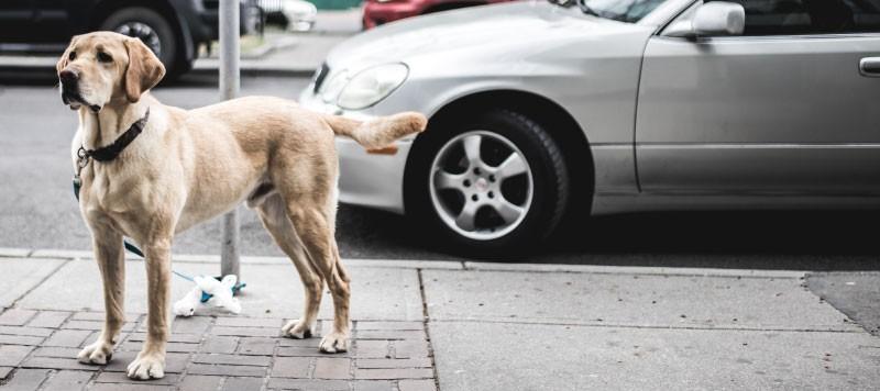 wir Labradors testen, ist auch die PRA